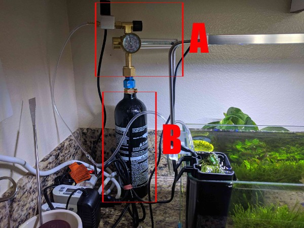 The beginners $100 paintball CO2 aquarium